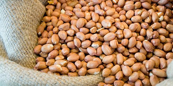 Geröstete Erdnüsse als Rohware