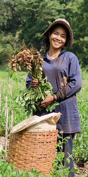 Fair und sicher: Erdnüsse aus kontrollierten Anbaugebieten